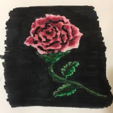 Pink Rose On A Black Background Illustration