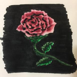 Pink Rose On A Black Background Illustration